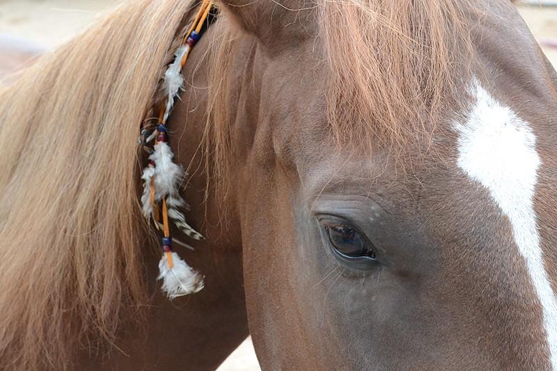 Mustang-Dame Kate mit Indianerschmuck