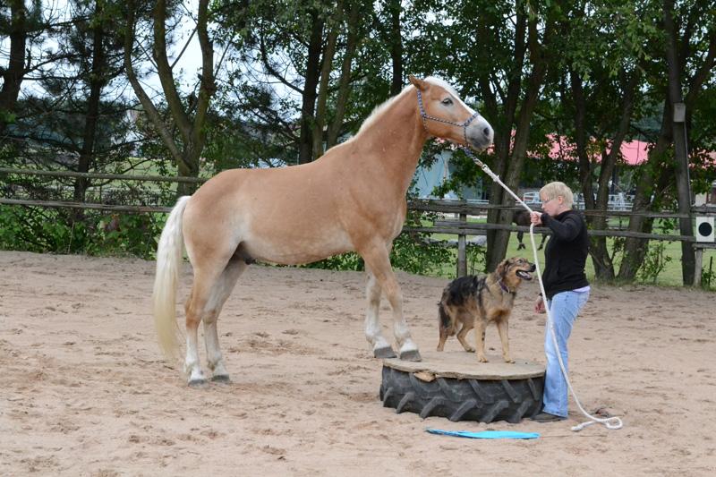 Die Pferd-Hund-Zirkusnummer