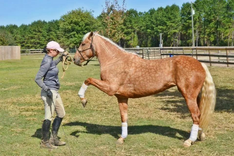 Taba Verkaufspferd Glorious Mustang Ranch