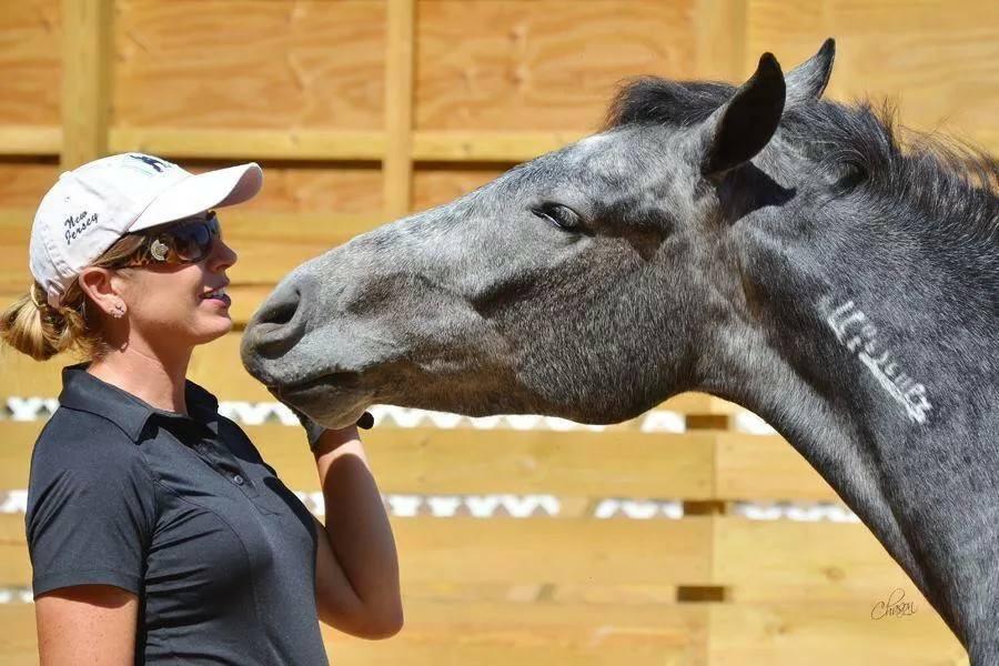 Ty Verkaufspferd Glorious Mustang Ranch