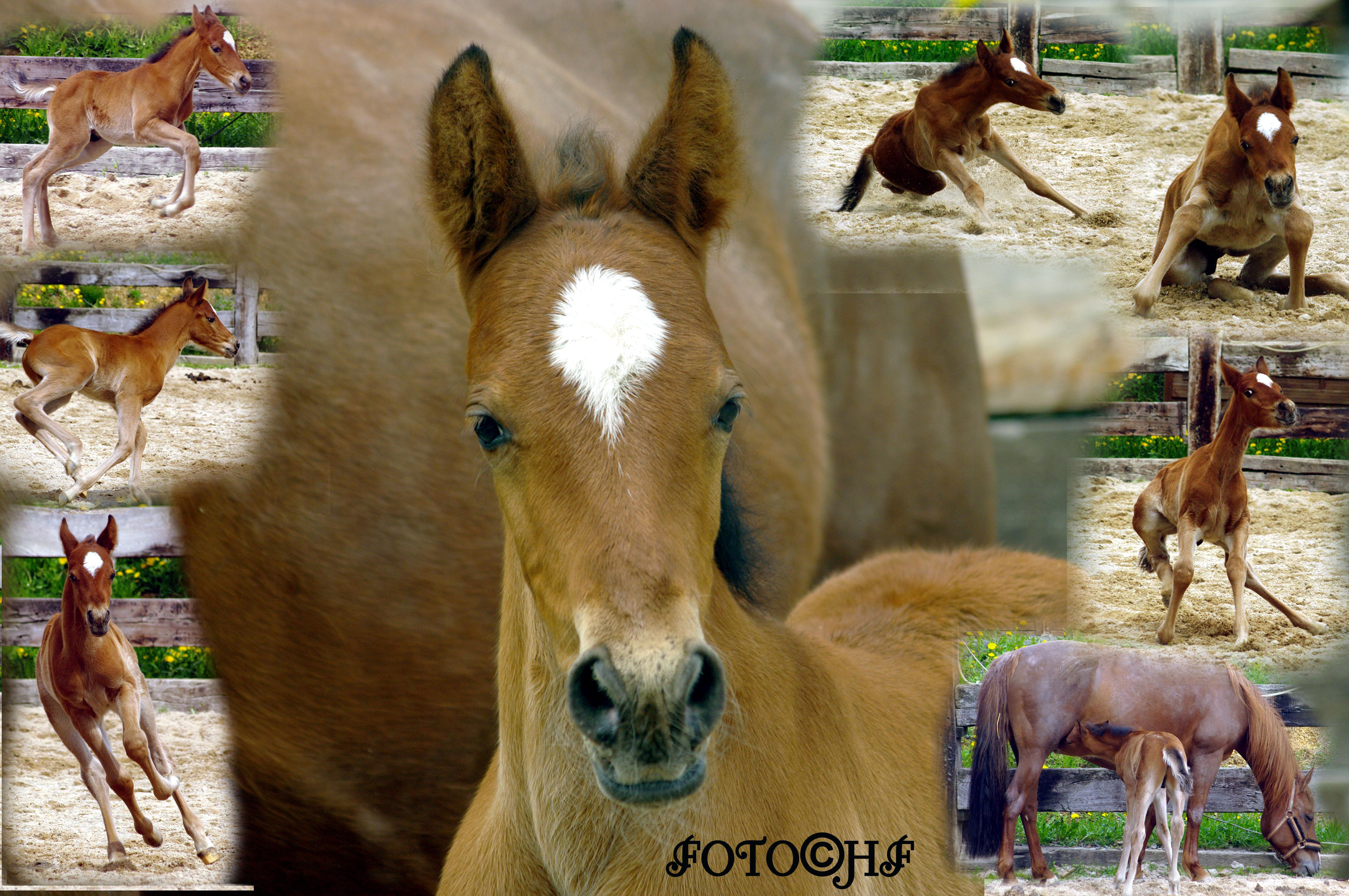 Glorious Bayard BLM Mustang